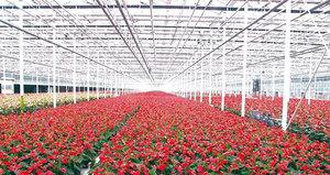 大顺花卉种植基地